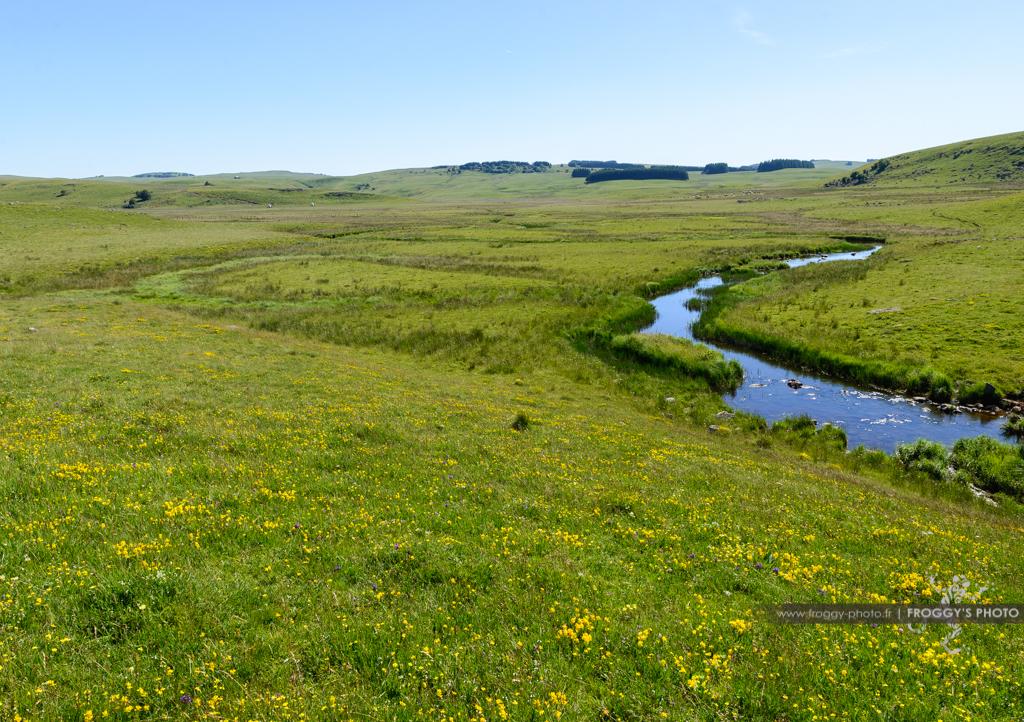 La Rivière des Plèches sur les plateaux de l'Aubrac. Célèbre pour sa pêche à la truite, elle traverse la région naturelle de l'Aubrac avec ses prairies fleuries.